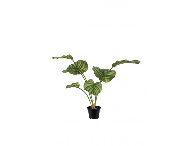 umela-rostlina-kalatea-v-kvetinaci