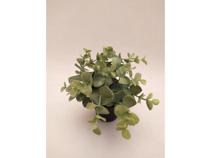 umela-dekorace-eukalypt-v-kvetinaci-iv-