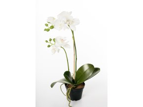umela-kvetina-orchidea-v-kvetinaci-bila