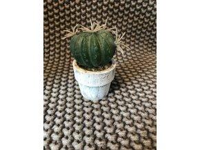 umela-dekorace-kaktus-mini-mix