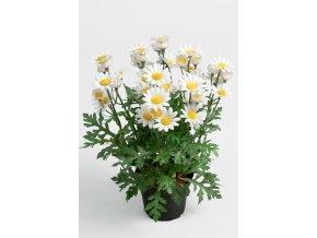 Umělá květina - Kopretina keřík