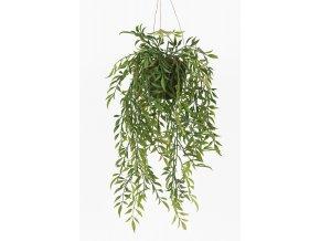 umela-rostlina-hoya-previsla-rostlinka-na-zaveseni