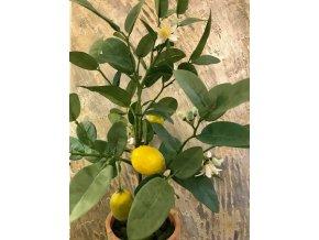 Umělá rostlina - Citronovník v hliněné nádobě