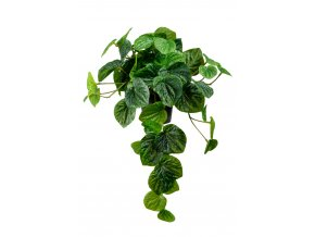umela-dekorace-peperomia-previsla-rostlina-v-kvetinacku