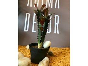 umela-dekorace-kaktus-v-kvetinaci-sukulent-s-listky--20-cm
