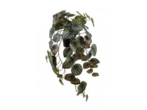 umela-rostlina-peperomia-tmave-zelena-45cm