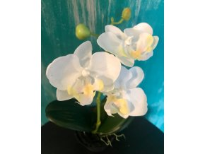umela-rostlina-orchidea-mini-bila