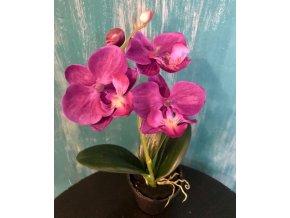 umela-rostlina-orchidea-mini-fialova