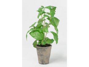 umela-rostlina-bazalka-okrasna-v-kvetinaci