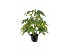 umela-rostlina-aralka-v-kvetinaci-35cm