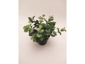 umela-dekorace-eukalypt-v-kvetinaci-i-