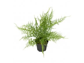 umela-dekorace-asparagus-v-kvetinaci-30cm