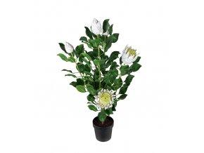 umela-dekorace-protea-bila-v-kvetinaci-120cm
