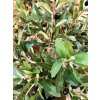 umela-dekorace-olivovnik-80-cm
