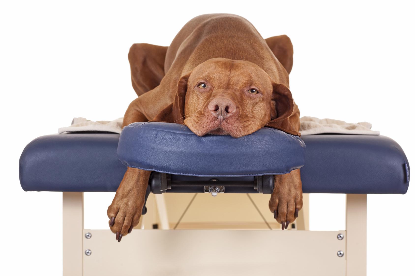 Dog therapist