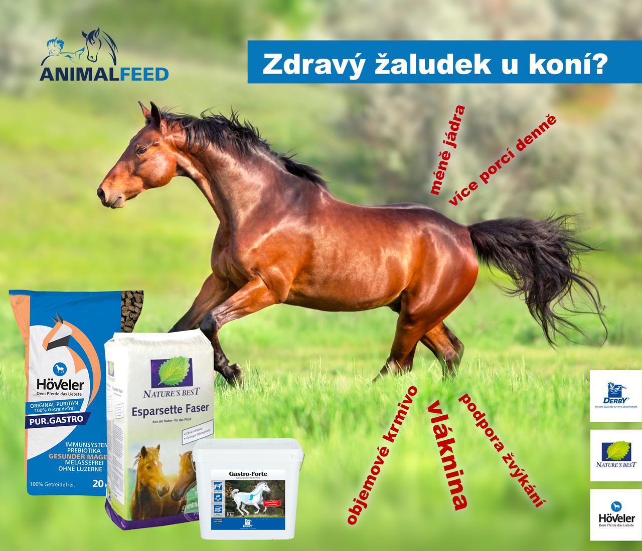 Žaludeční vředy u koně