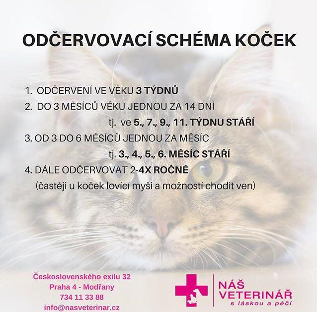 Schéma kočka