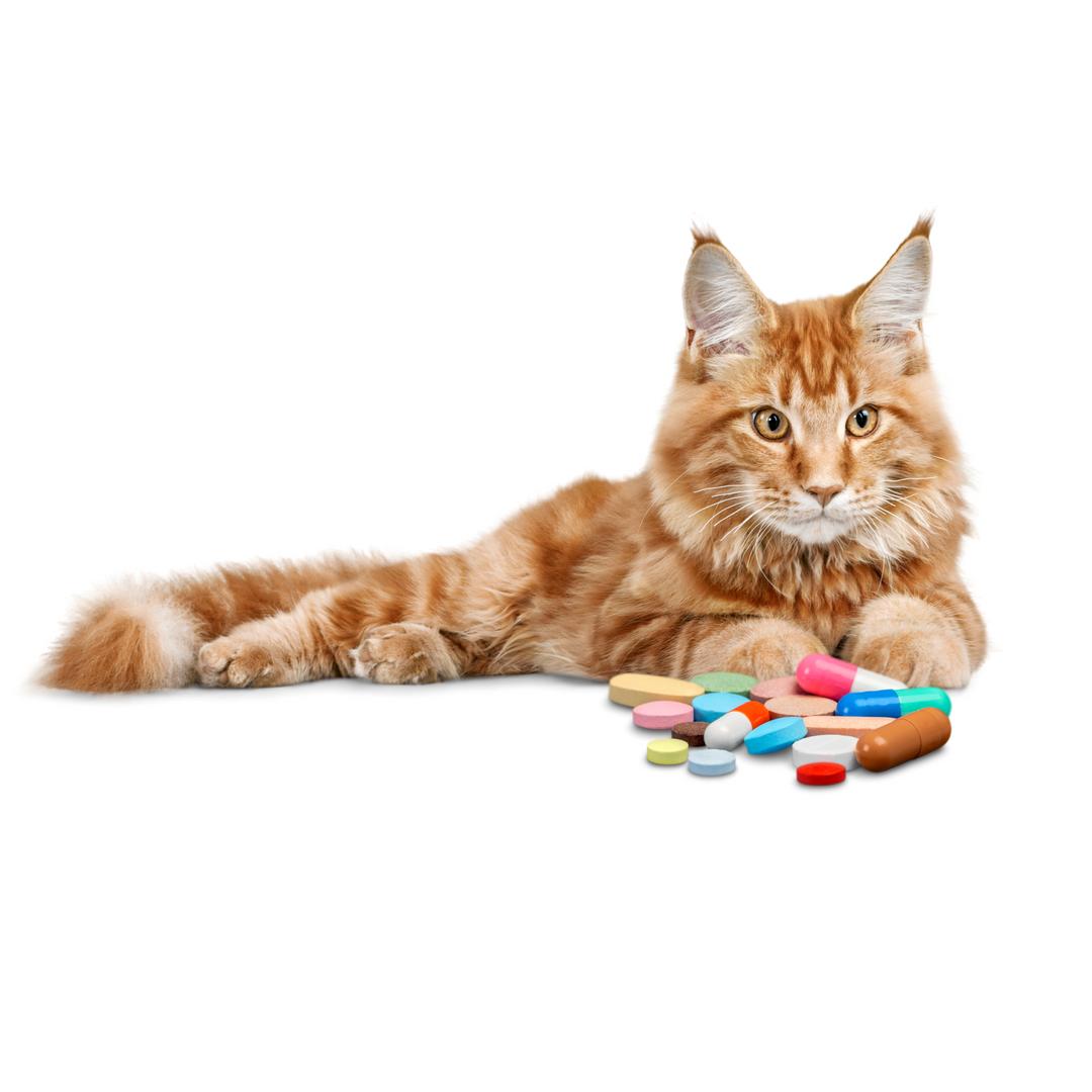 Vitamíny a dopňky stravy