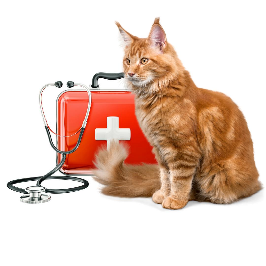 Nemocná kočka