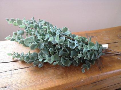 Zelená vetvička eucalyptus drobnolistý 46cm