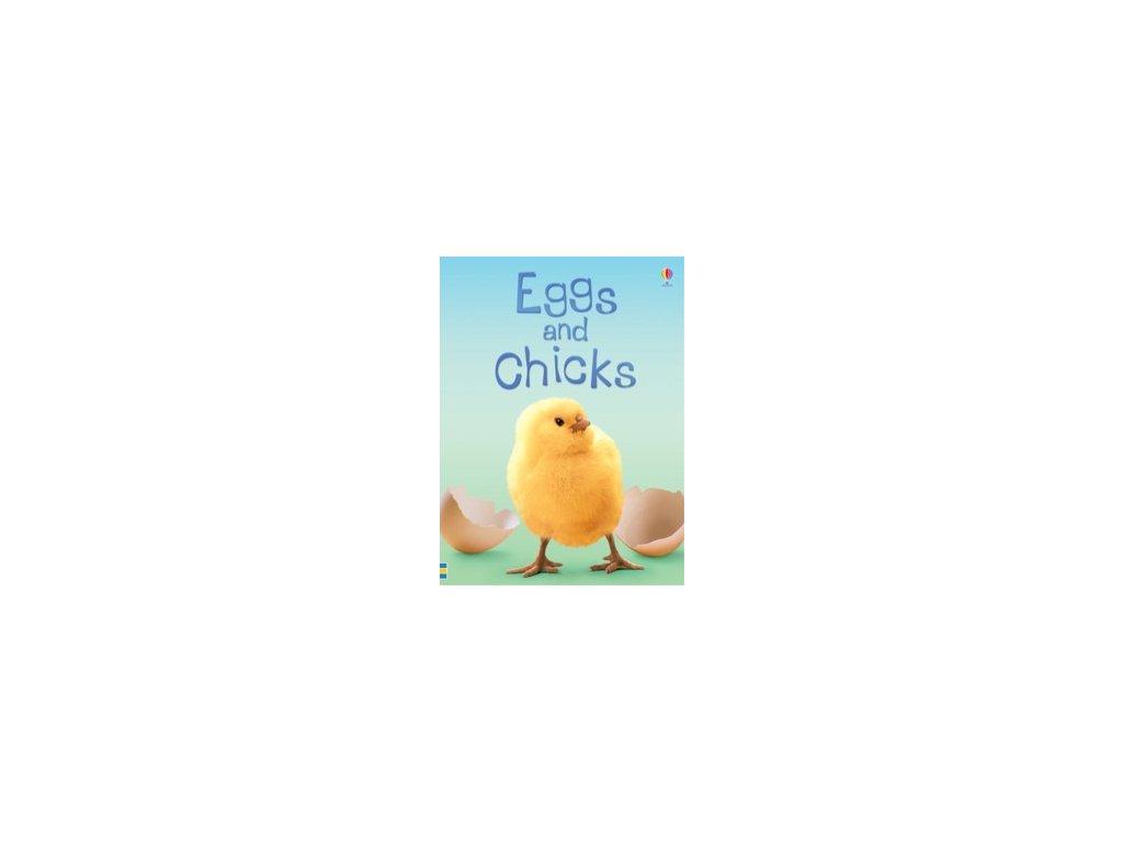eggs chicks