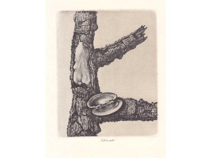 42 718 raneny strom s lasturou