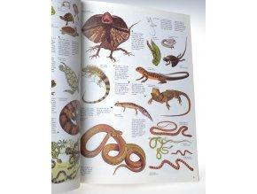 Království zvířat