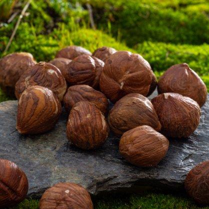 liskove orechy0592 macro