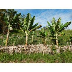 papua0161 macro