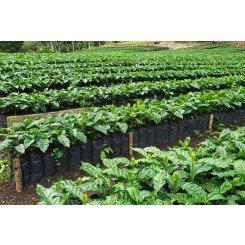 Káva Nikaragua SHB EP El Limoncillo (Mletí Hrubě mletá káva - pro french press či cupping, Váha 1000g)