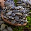 semena dyne loupana0513 macro