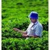 Káva Austrálie Skybury (Mletí Zrnková - nemletá káva, Váha 500g)