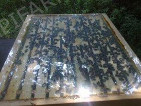 Mladé včelstvo na 8-9 plástech 3/4 Langstroth (včetně nového nástavku)