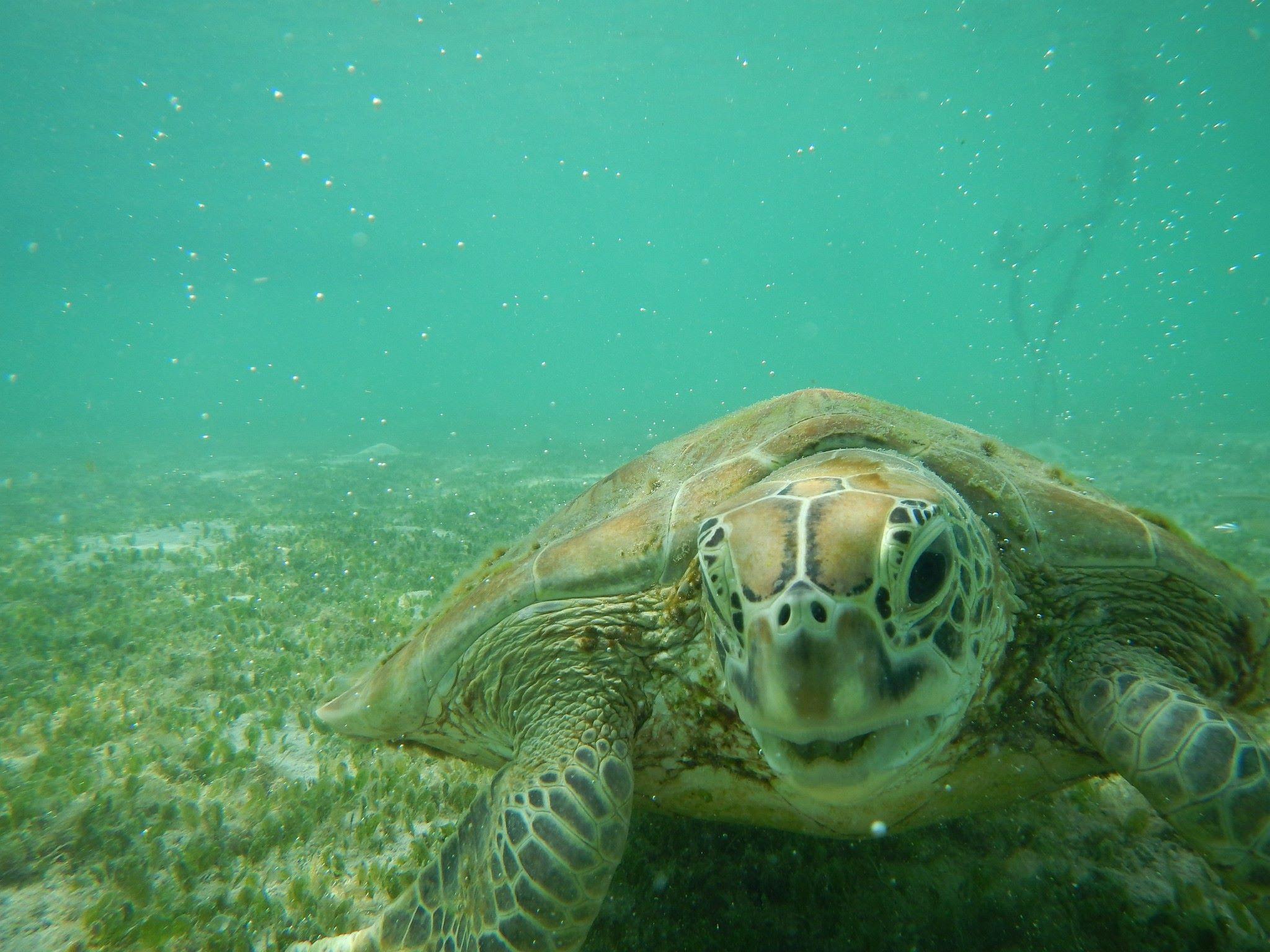 Cestovatelský večer s mořskými želvami v Indonésii