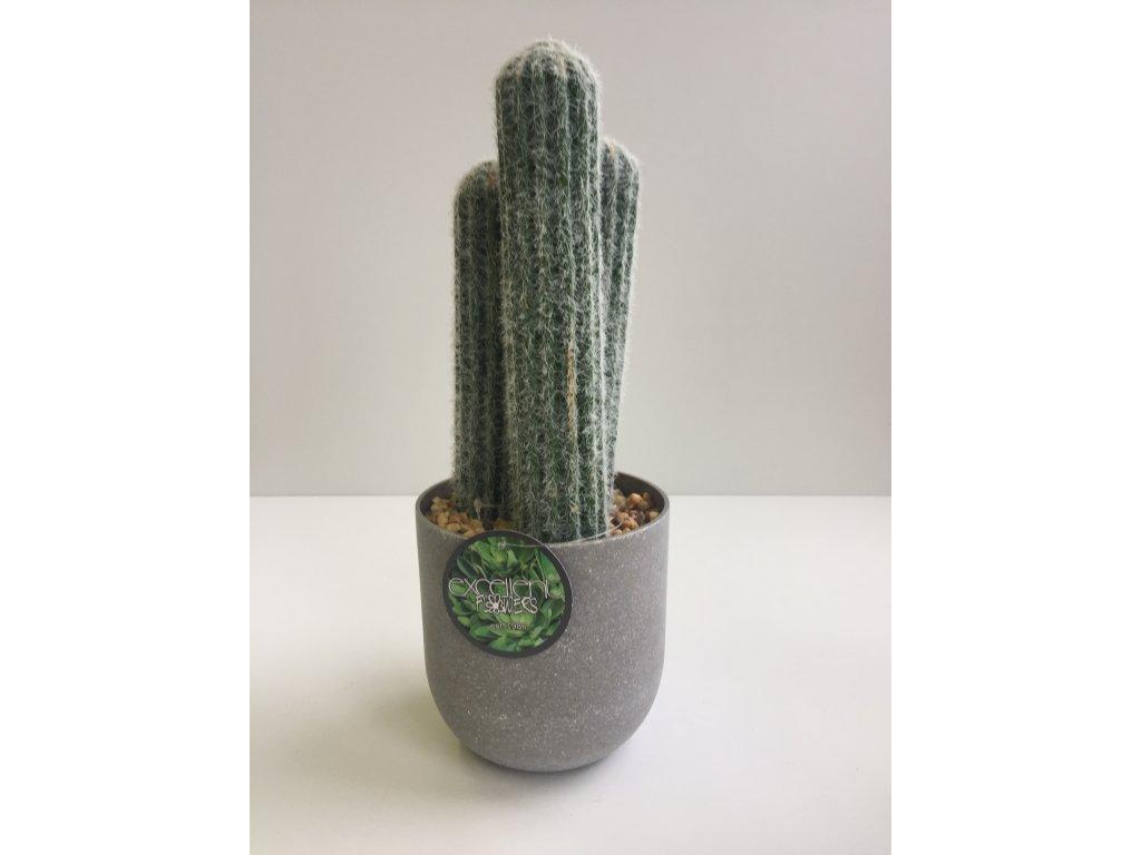 Kaktus v květináči 28cm