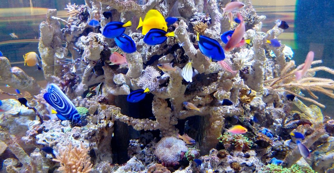 morská akvaristika