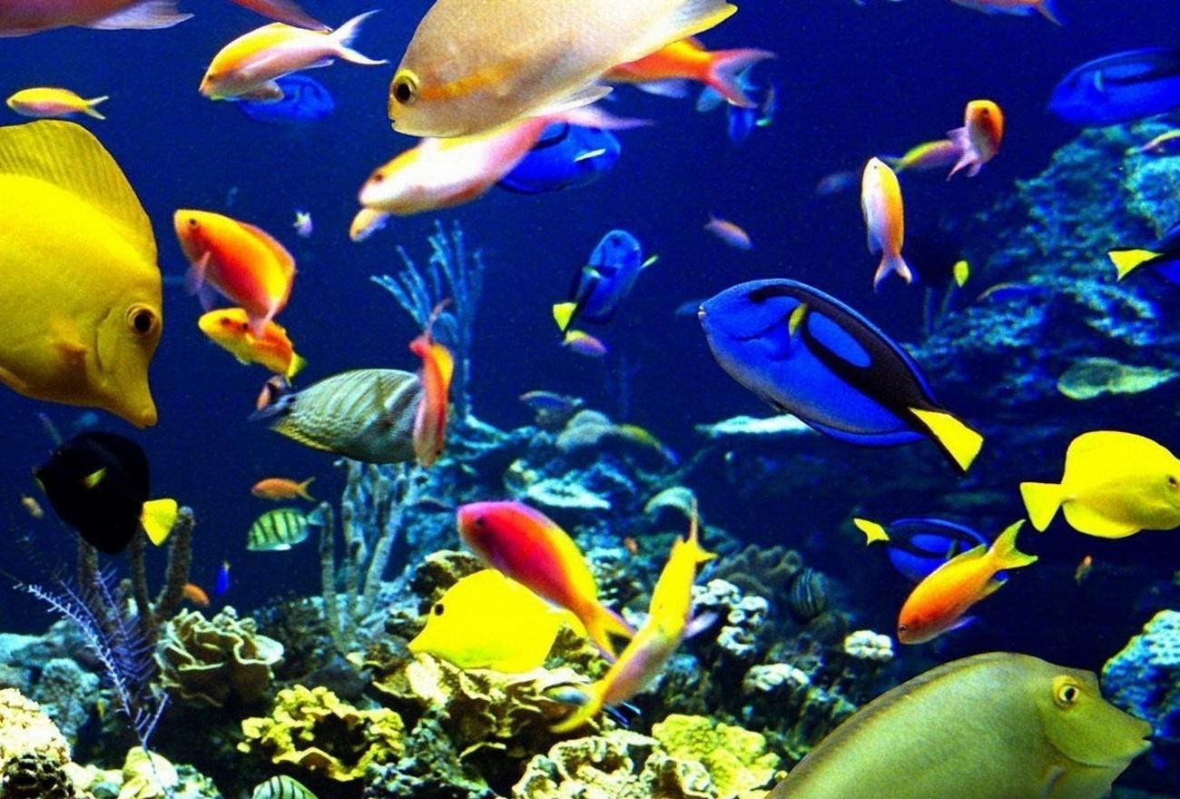 Morské živočíchy