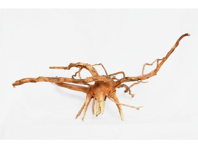koreň 0040  Red Moor Wood korene