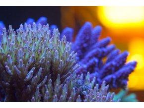 AF sea salt 25