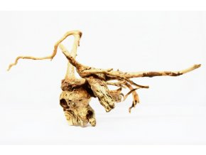 koreň 0001  Red Moor Wood korene
