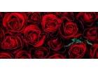 Autentické růže