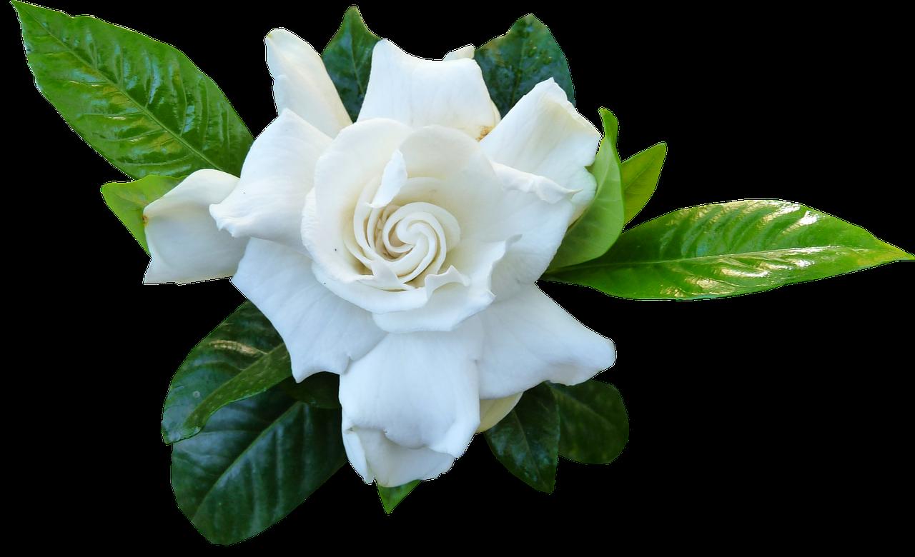 flower-3896587_1280