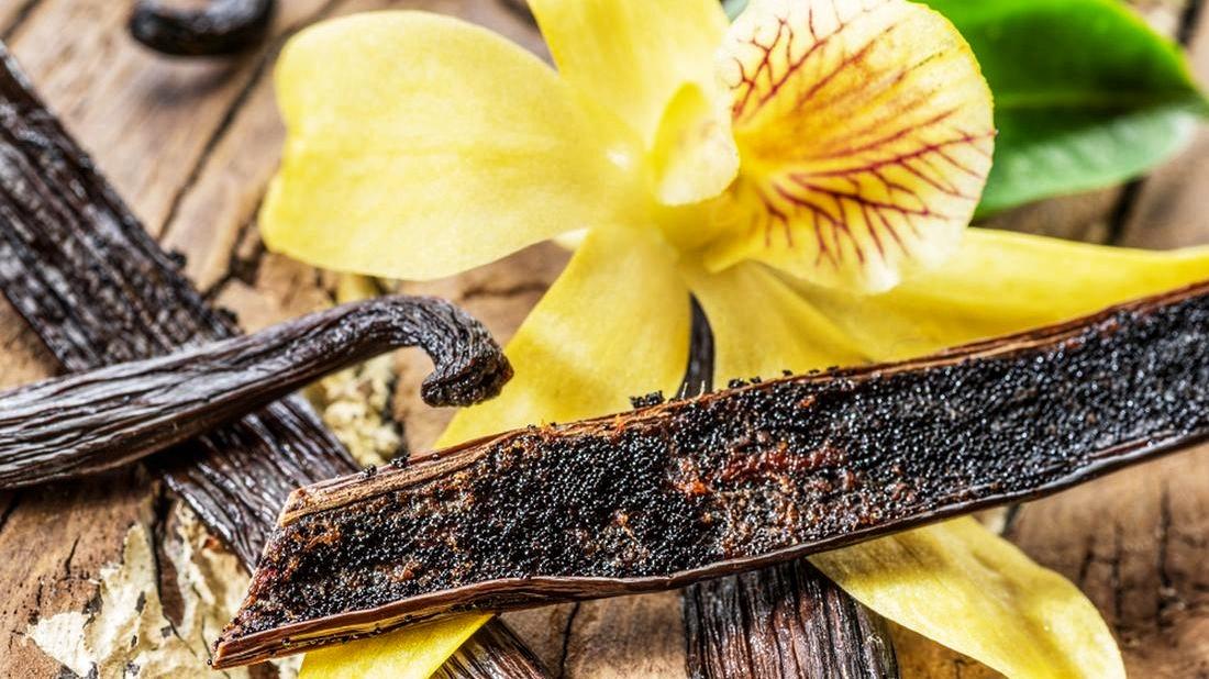 vanilka-prava-vanilla-planifolia-vanilka-5-1100x618-01