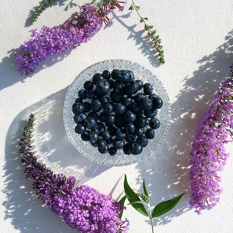 kvetiny-a-iitala5