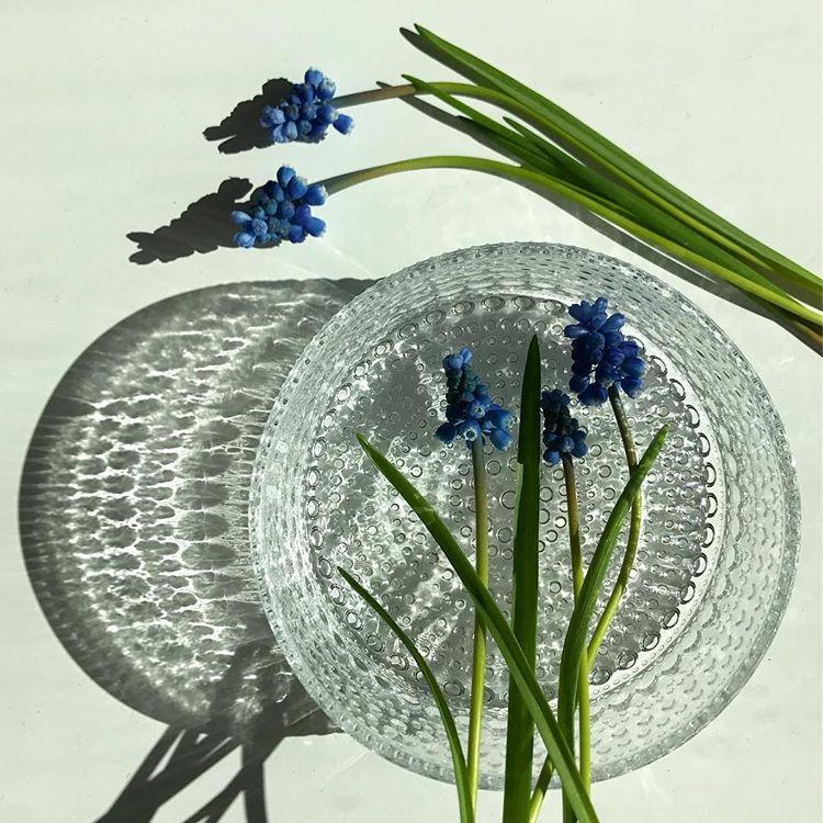 kvetiny-a-iitala6