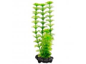 Rostlina TETRA Ambulia S