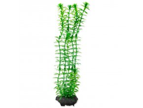 Rostlina TETRA Anacharis M