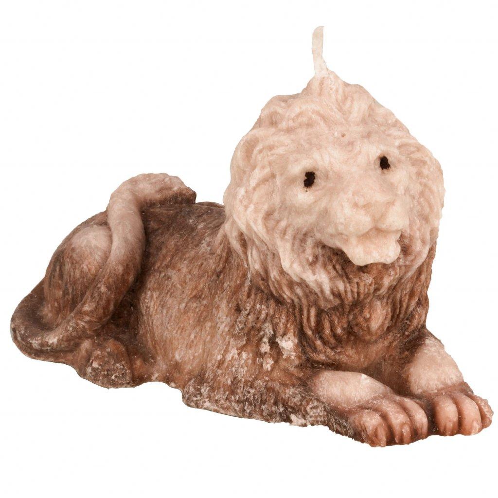 lev hnědý