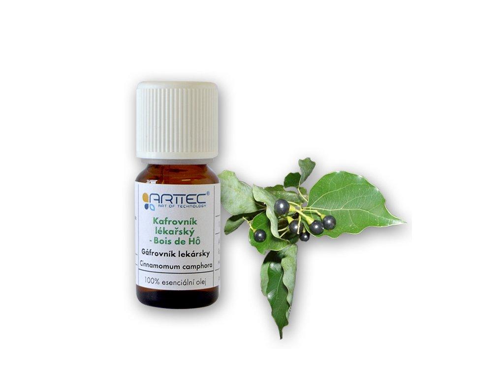 Kafrovník lékařský - Bois de Ho (Cinnamomum camphora), Gáfrovník lekársky