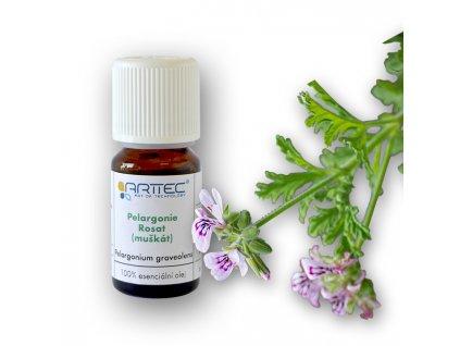 Geranium (Pelargonie) bio Egypt (Pelargonium graveolens)